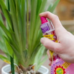 Love orchids, but not sure how to take care of them? These orchid care tips explain how to keep them happy, with the help of the Baby Bio Orchid care range.