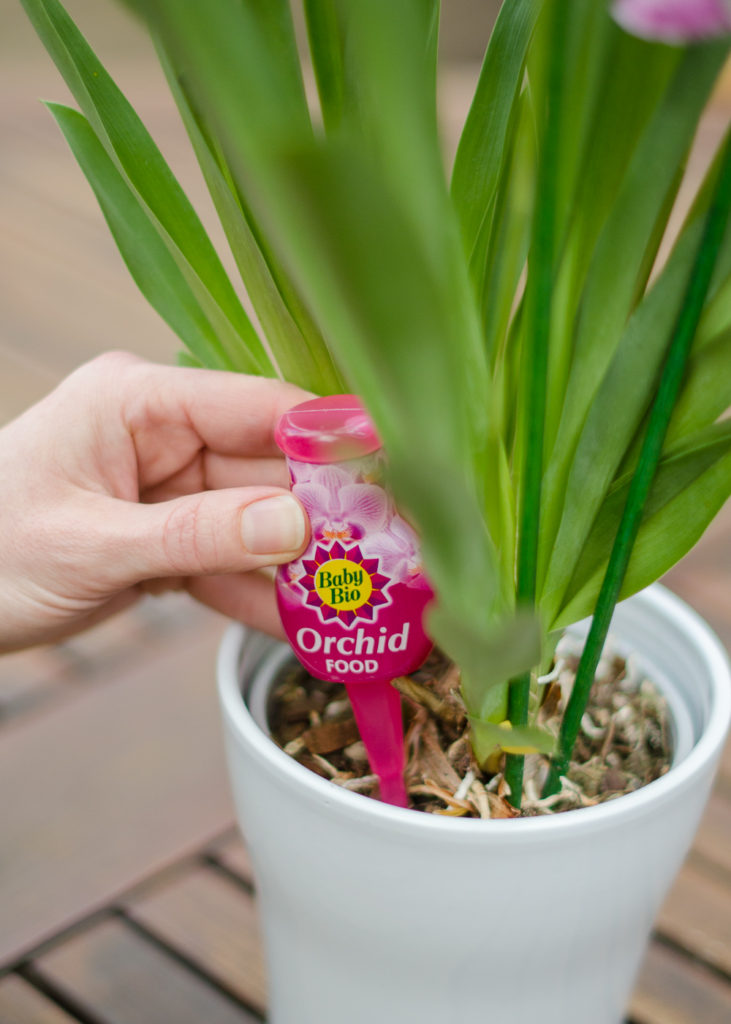 Adding a drip feeder to an orchid plant pot