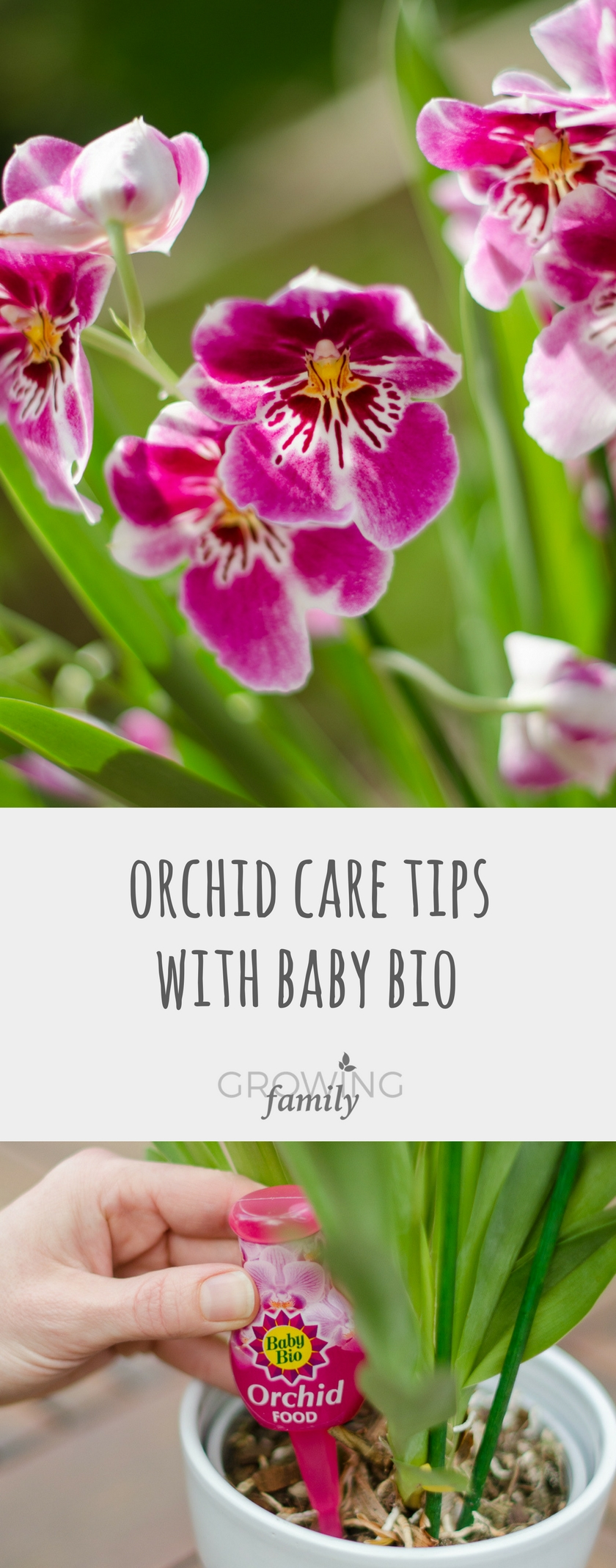 26159bc8e7698c Orchid care tips with Baby Bio - Growing Family