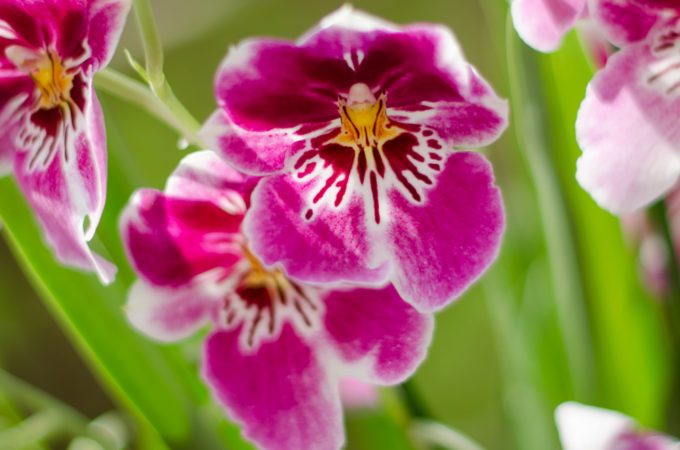 Orchid care tips with Baby Bio