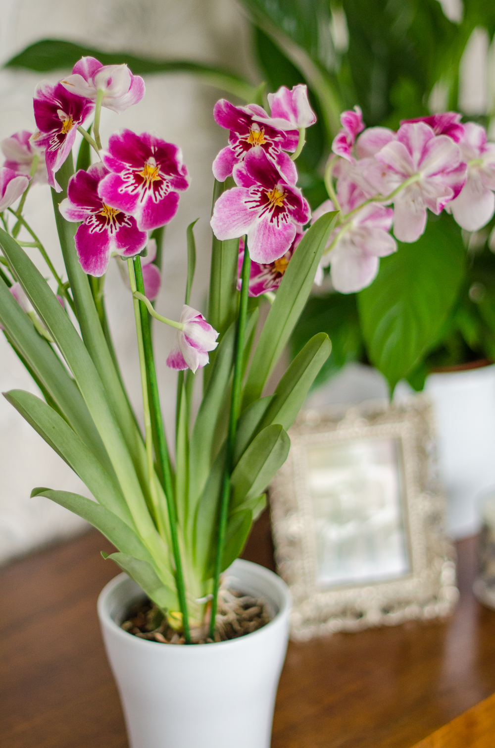 Orchid care tips with baby bio growing family How do you care for orchids after they bloom