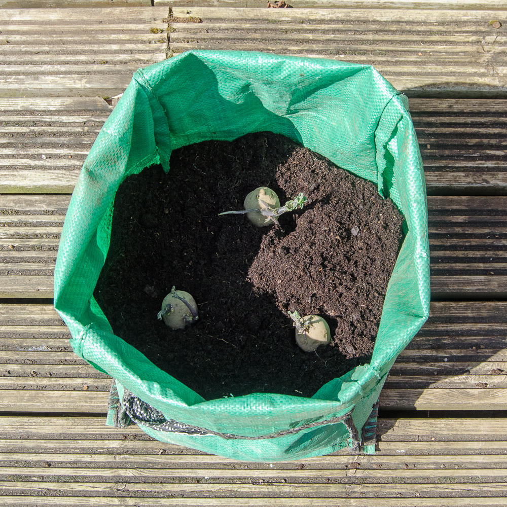 how to grow potatoes in bags