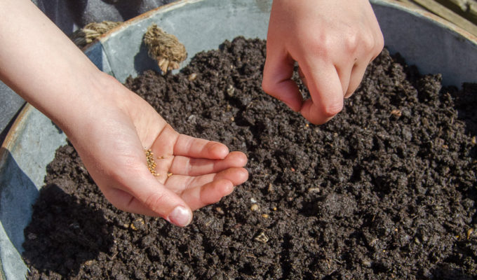 Grow Your Own for kids: how to grow salad