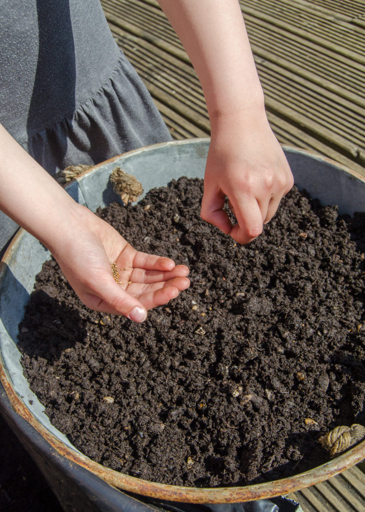 gardening for kids - sowing salad seeds