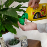plant care with baby bio pour and feed