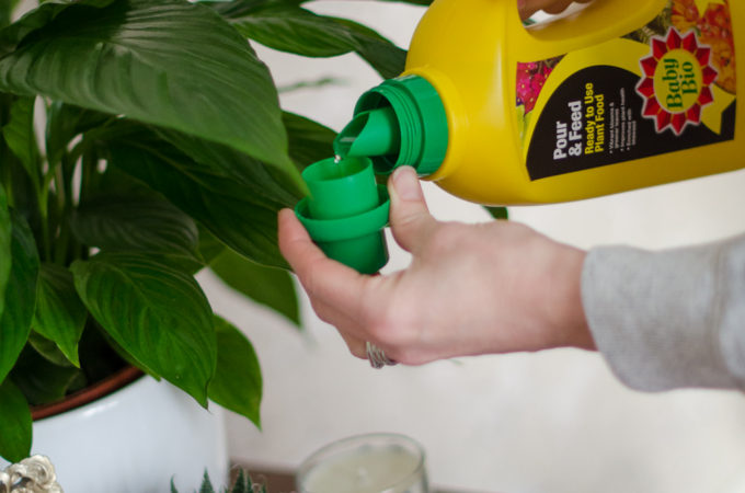 Plant care tips for containers