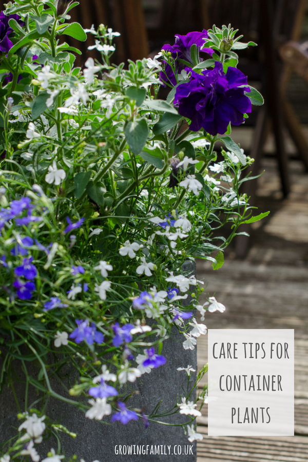 Not sure how to take care of your container plants? These easy plant care tips explain how to keep them happy!