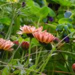 orange flower border
