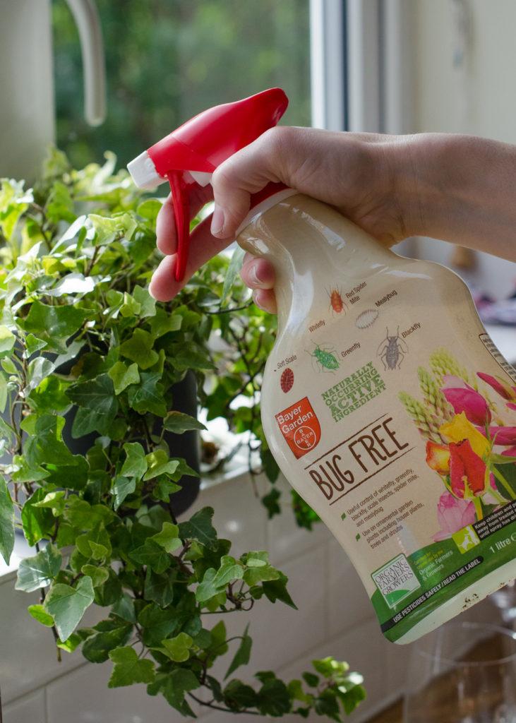 bug free plant pest control