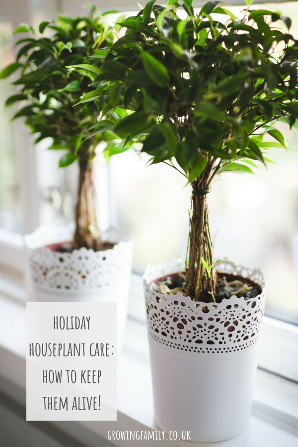 Going on holiday? Check out these houseplant care tips for keeping them alive and happy while you're away!
