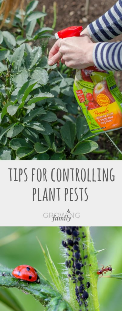 Not sure how to deal with plant pests? These garden pest control tips explain how to prevent and deal with plant pests, with the help of Provado & Bug Free.