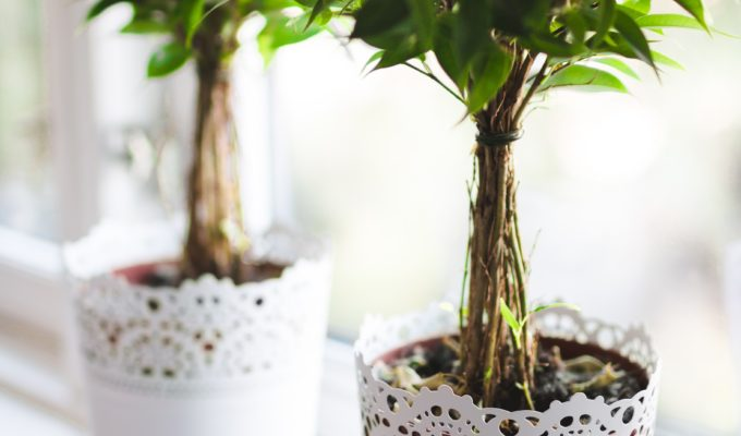 Holiday houseplant care: how to keep them alive!