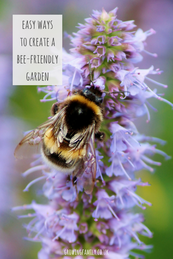 No matter how small your garden, you can do your bit to help bees thrive. Check out these easy tips for making your garden bee-friendly.
