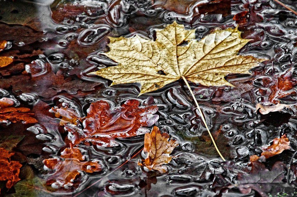 waterlogged leaves