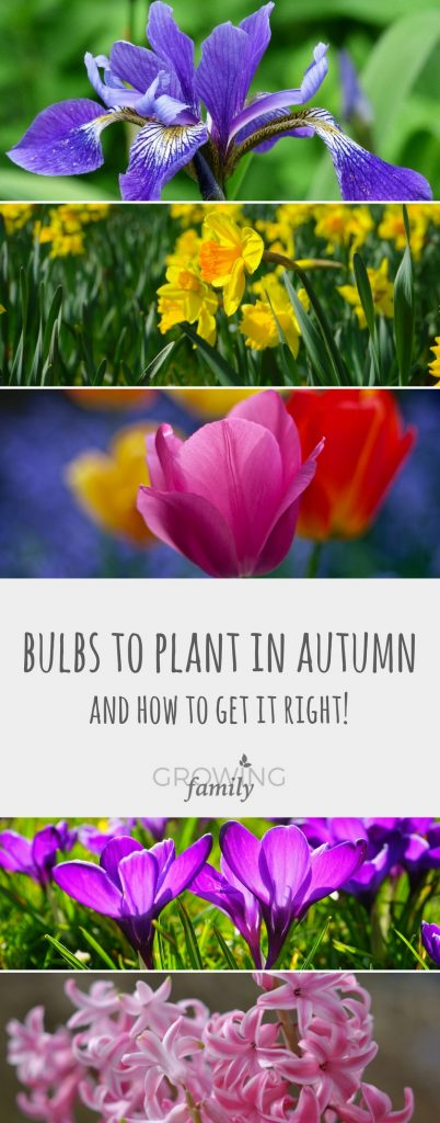 Flowering bulbs are brilliant for creating wow factor in your garden. Check out this easy guide on which bulbs to plant in autumn for a colourful, low cost display, plus instructions on how to do it.