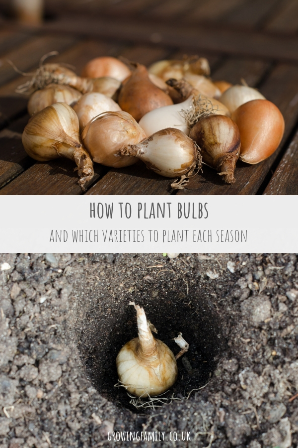 Flowering bulbs are brilliant for creating wow factor in your garden; check out this easy guide on how to plant bulbs for a colourful, low cost display.