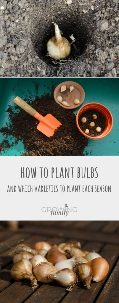 Flowering bulbs are brilliant for creating wow factor in your garden. Check out this easy guide on how to plant bulbs for a colourful, low cost display, plus which varieties to plant by season.