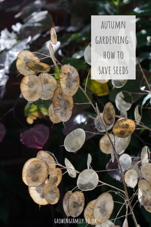 Harvesting seeds in autumn is a great way to get lots of new plants for free, and it's easier than you think. Here are some tips on saving seeds.