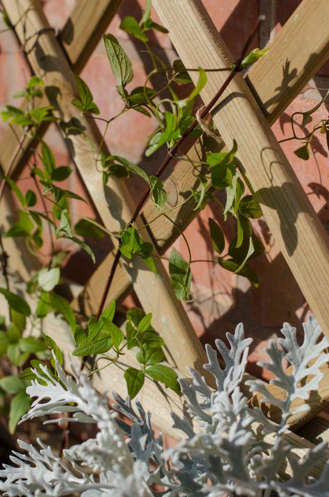 forest toulouse trellis planter