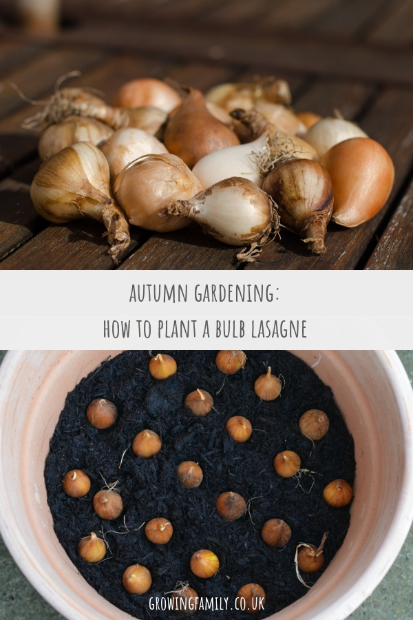 How to plant a spring bulb lasagne in a container - a quick and easy gardening job that will give you lots of blooms to enjoy in the depths of winter.