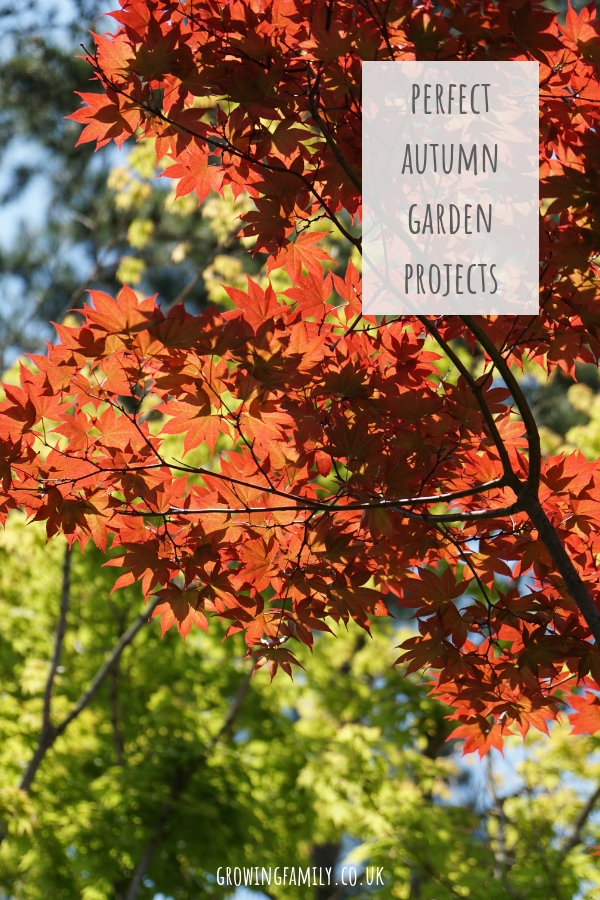 Autumn is a brilliant time of year to tackle new garden projects. Here are some autumn garden project ideas to make your garden even better next year.