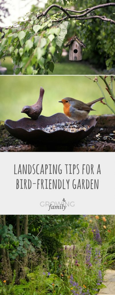 Want to encourage more wild birds to visit your garden? Check out these tips for creating a bird-friendly garden and create the perfect place to perch!
