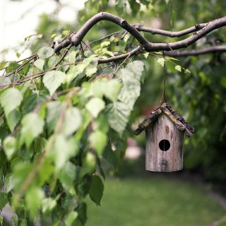 bird house in tree