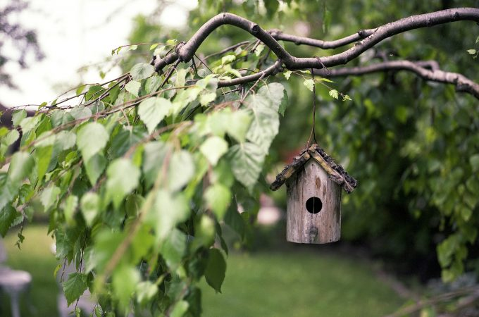 Bird-Friendly Garden Landscaping