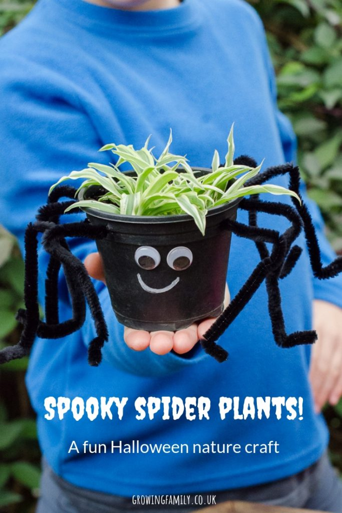 How to make your own spooky spider plants - a simple, fun nature craft that's perfect for Halloween! Includes full instructions.