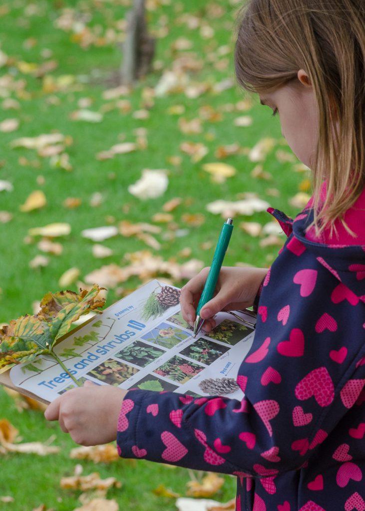 rspb wild challenge trees leaves and seeds
