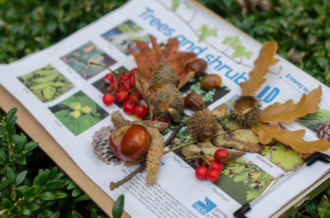 Taking the RSPB Wild Challenge: trees, leaves and seeds