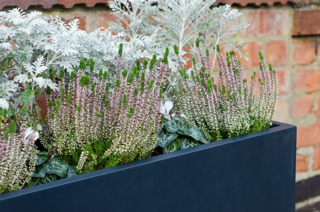 container plant trough