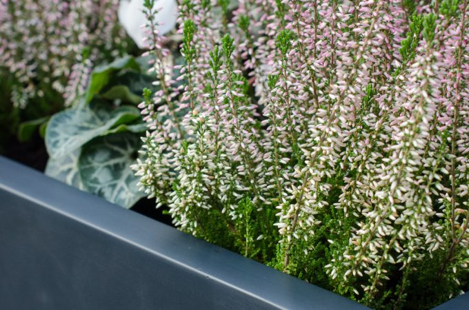 Review: Planters Online Visio fibreglass plant trough