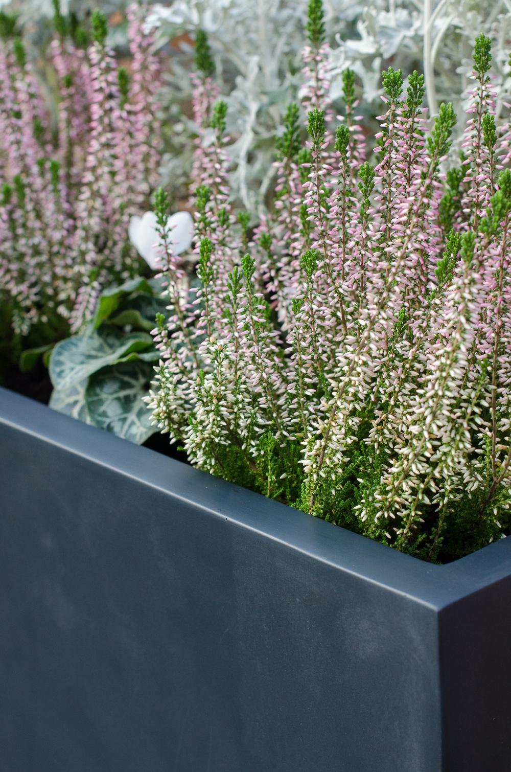 Review: Planters Online Visio Fibreglass Plant Trough