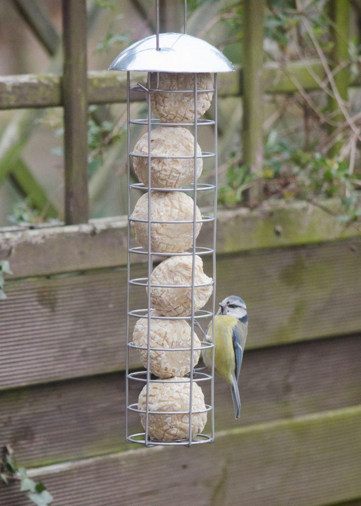 Bird on fat ball feeder