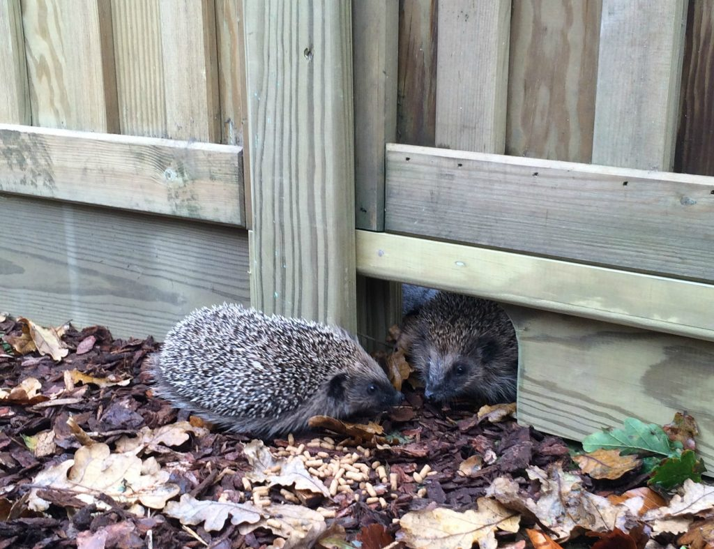 garden fencing hedgehog gravel board