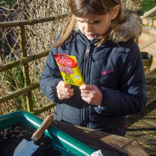 sowing sweet peas reading packet