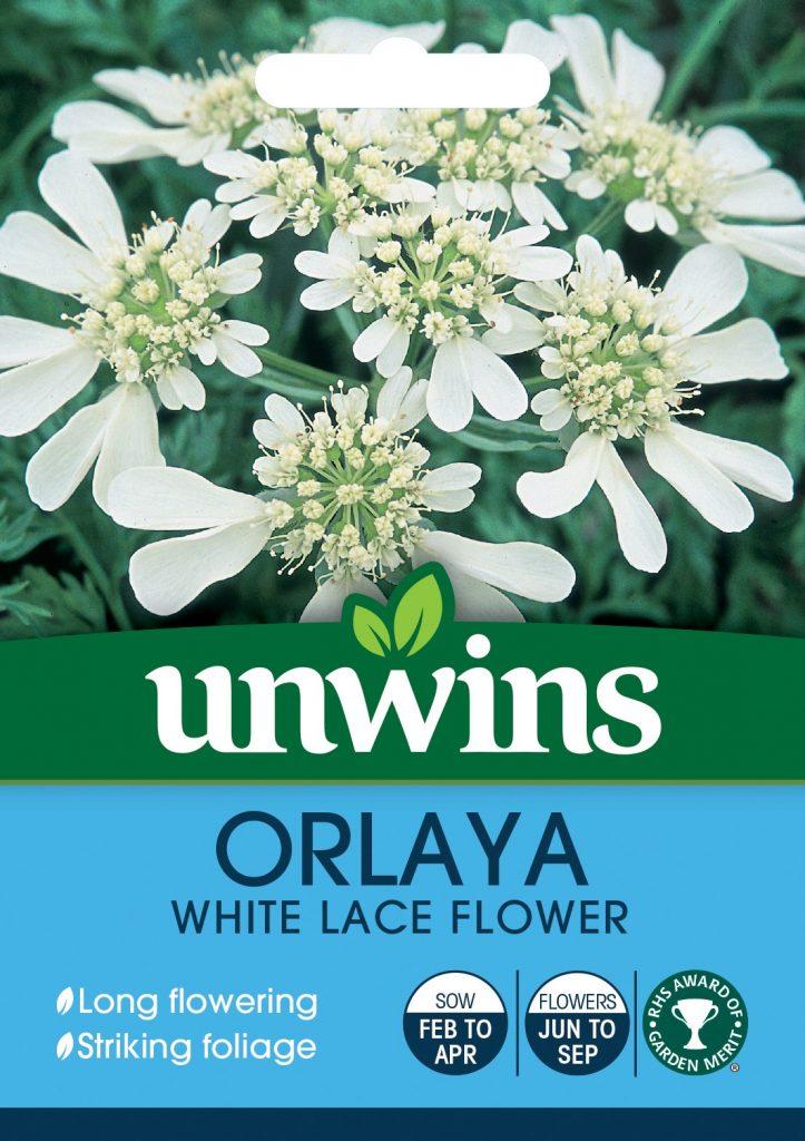 Unwins Orlaya seeds