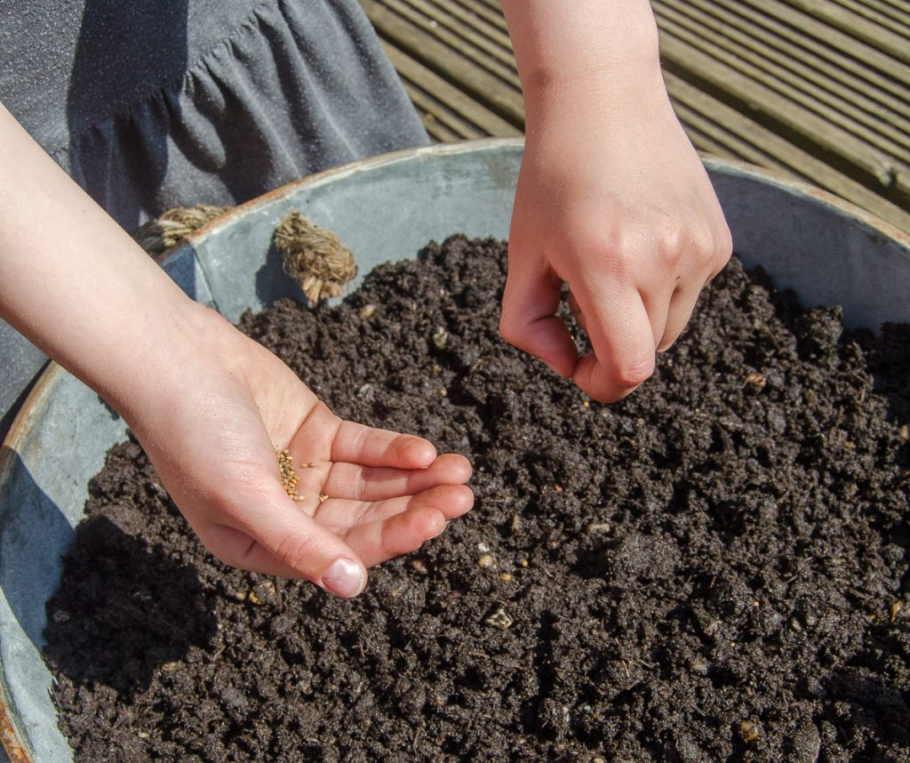 children sowing seeds
