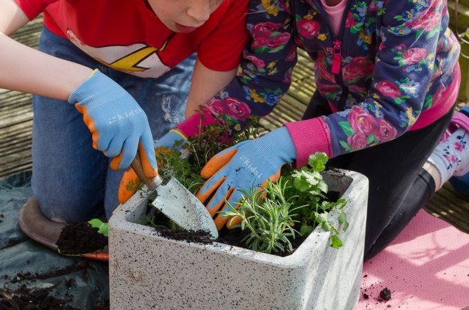 container gardening with children and dobbies garden centres