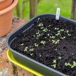 elho grow tray seedlings