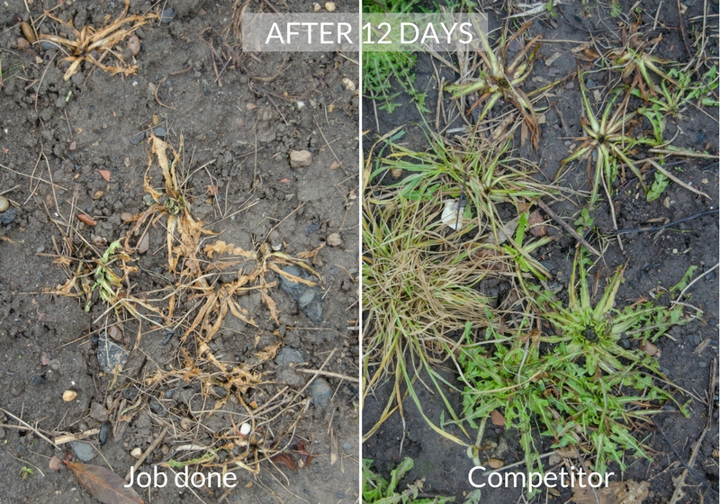 job done weedkiller comparison after 12 days