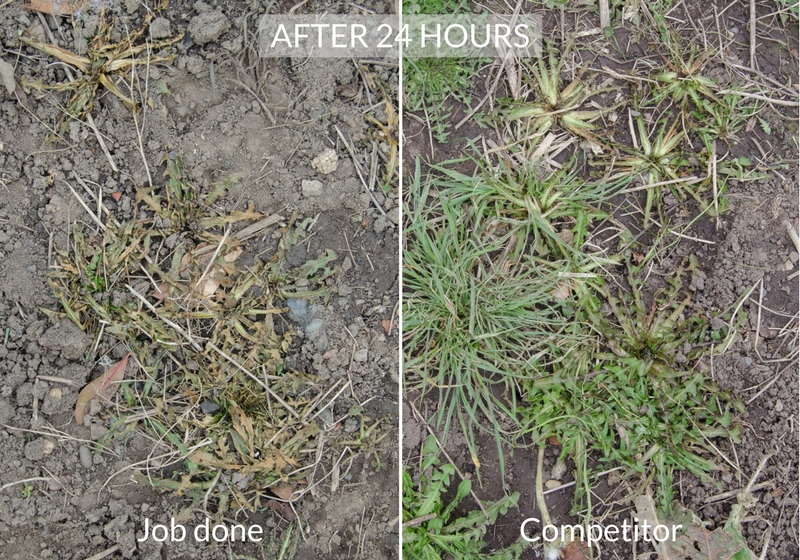 job done weedkiller comparison after 24 hours