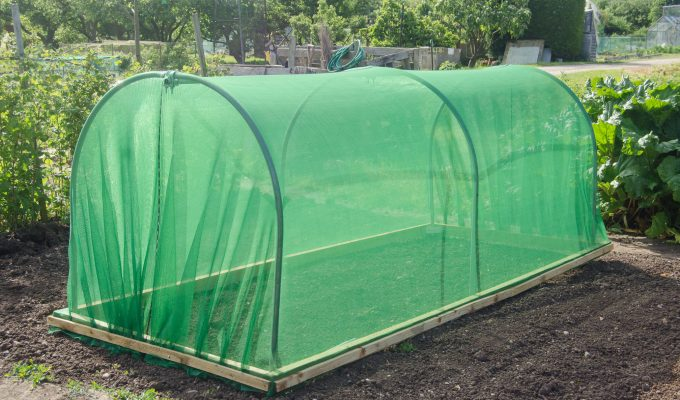 Review: First Tunnels Mini Polytunnel