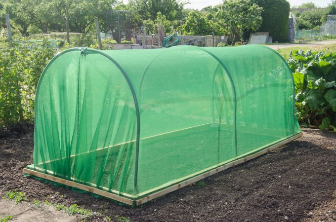 First Tunnels mini polytunnel with netting