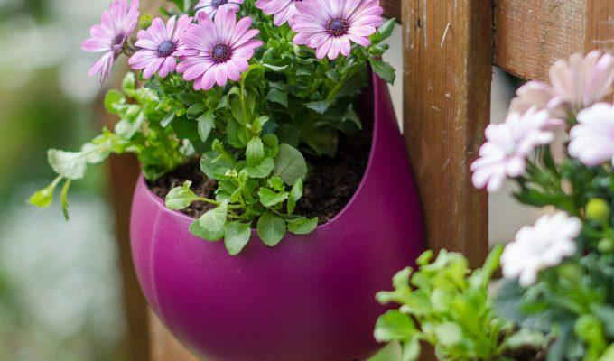 Great gardening ideas with wilko