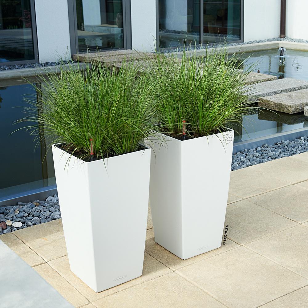 container gardening lechuza cubico planter
