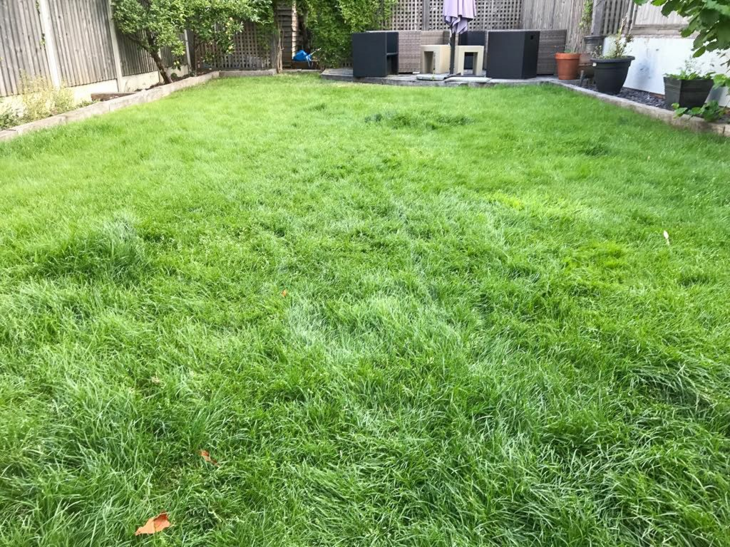 Stihl RMA339C lawn before