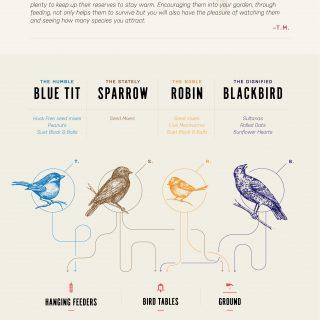 feeding garden birds in winter infographic