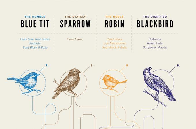 Tips for feeding garden birds in winter